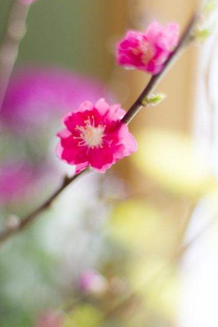 子どもと一緒に行きたい九州・沖縄のひな祭り・桃の節句イベント5選