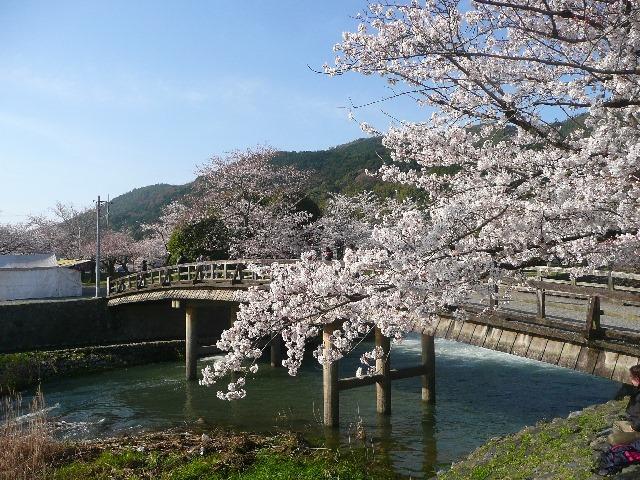 子どもと一緒に行きたい関西の花見・桜イベント5選