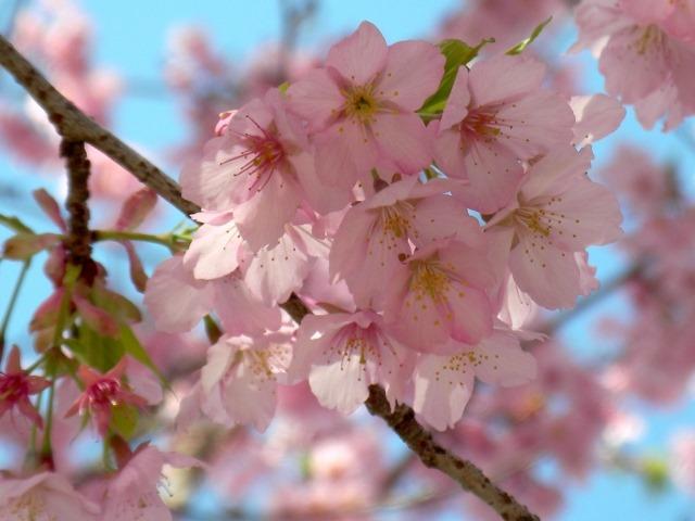 子どもと一緒に行きたい中部地方の花見・桜イベント5選