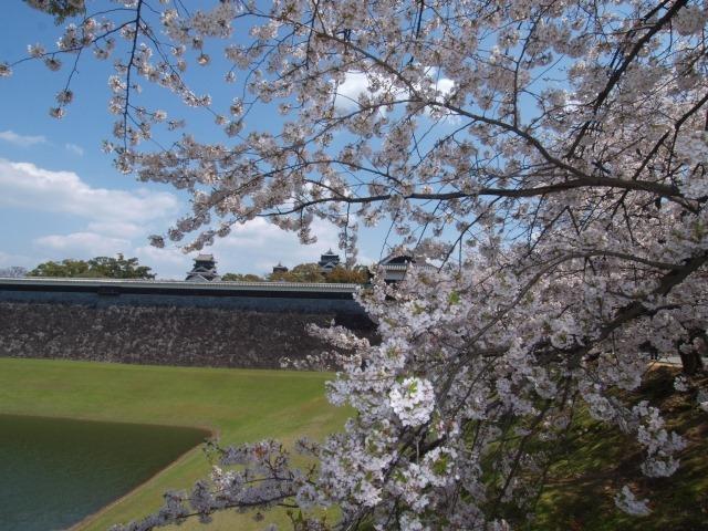 子どもと一緒に行きたい九州の花見・桜イベント5選