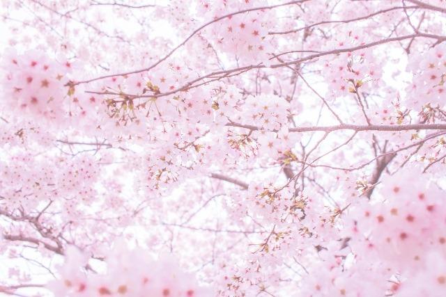 子どもと一緒に行きたい中国地方の花見・桜イベント5選