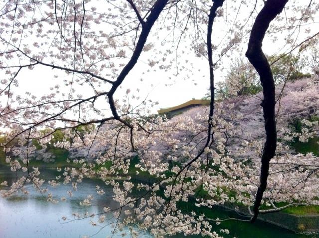 子どもと一緒に行きたい東京の花見・桜イベント5選