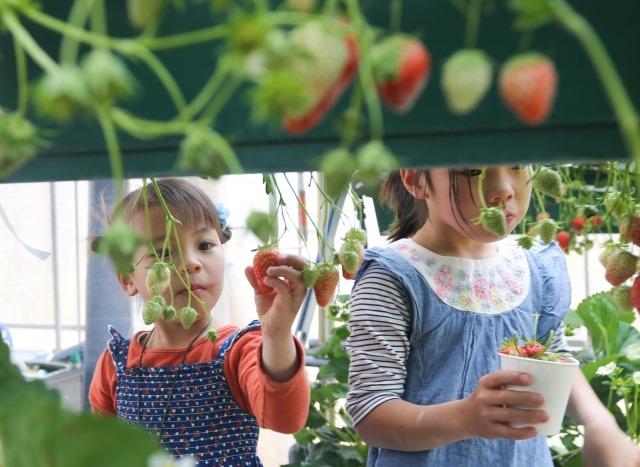 子どもと一緒に行きたい関東の子供の日・GWイベント4選